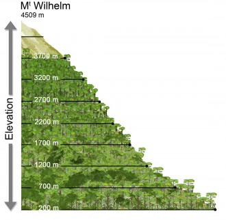 Mt. Wilhelm transect (drawn by M. Leponce)