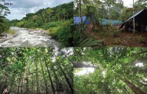 Forest at Kausi, 200 m asl. station