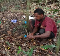 Dominic Rinan surveying seedlings in a permanent plot.