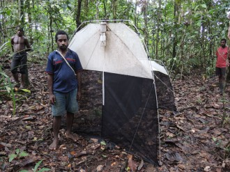Monitoring flying insects using a Malaise trap in Wanang forest.