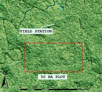 The plot, and nearby research station, are situated in pristine lowland rainforest.
