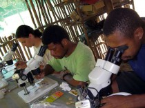 Looking at insects in Wanang bush lab.
