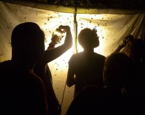 Light in the forest attracts students as well as moths.